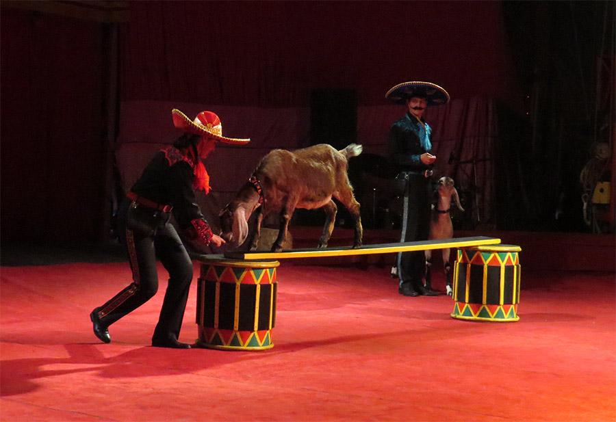 Большой Государственный Цирк - представление