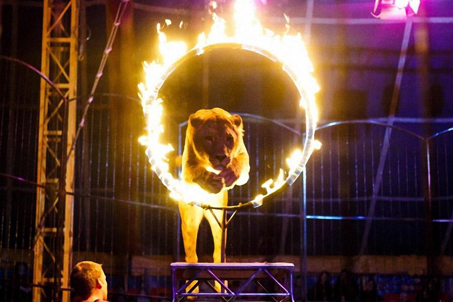 Представление в Цирке Автово
