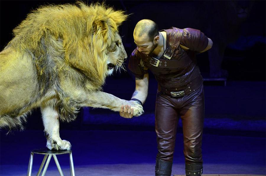 Лев в Цирке Автово