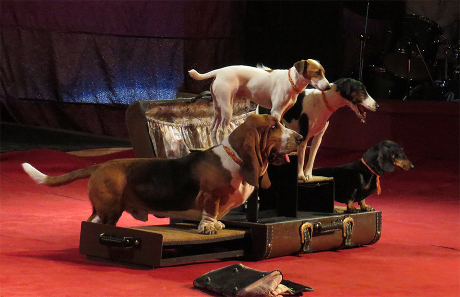 Цирк на Фонтанке - собачки